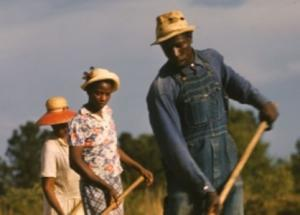 Sharecroppers chopping cotton (1941)